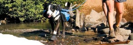 Dogs need clothing for certain situations, Boots for rough terrain, Coats to keep warm and to stay cool in the hot weather, Jackets to stay dry, Backpacks for training or for travel adventure, life jackets to keep your pet safe in and around water